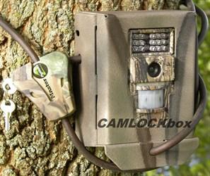 X6C Tree Pic